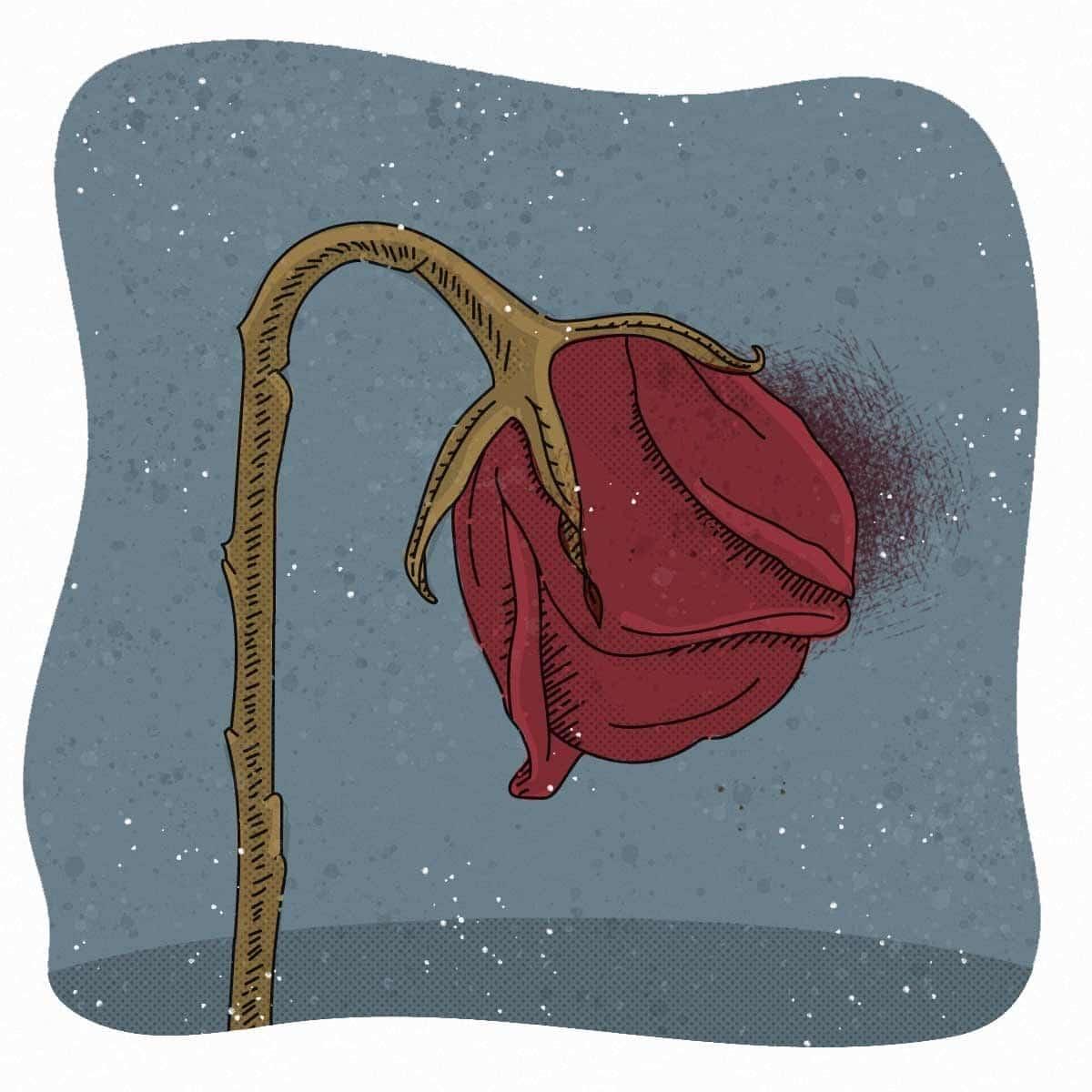 Ilustración de rosa marchita